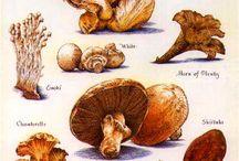 Κυνήγι Μανιταριου- Mushroom Hunting