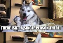 Cheesy Pun Dog!! / Hilarious jokes that are basically Gramma Jokes:)