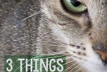 Cats articles