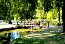 Fonti del Clitunno / Fonti del Clitunno a pochi km da Spoleto vi aspetta un parco magico: un eden naturalistico e botanico.