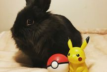 Mina kaniner <3