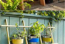 Garden & houseplant