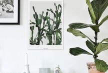 .greens. / plants for the house