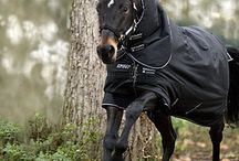 Horse Favorites