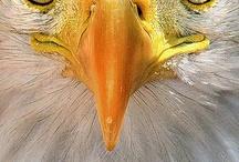 Eagle Scout / by Zebbie Borland .