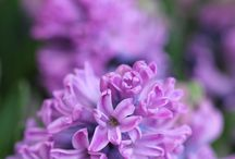 Spring in Arboretum / Pomlad v Arboretumu / Spring in Arboretum / Pomlad v Arboretumu