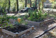 My Garden / Ideas from my garden / by Mary Jane Pike