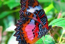 Najpiękniejsze Stworzenia Świata / Piękno Natury