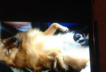 Non Jeff! t es pas tout seul  / JEFF adorable petit chien .... confortablement installé... pour une balade en voiture
