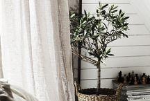 Olive tree | Olijfboom