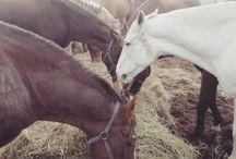 Konie - Fundacja Tara