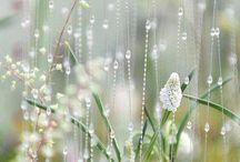 piękne fotki kropli deszczu