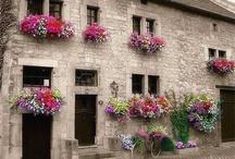 windows &doors
