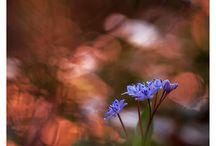 Fleurs (3) / « Dans un grain de sable voir un monde, dans chaque fleur des champs le Paradis », William Blake