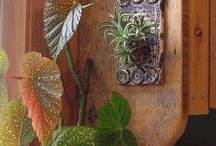 Tillandsia Display Inspiration / by Alison Conliffe