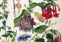 INSPIRATION illustration / botanical illustration board  ボタリカルイラストレーションのボード