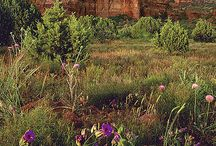 SEDONA: Abundant Spring / Spring time in Sedona and all around Arizona. Temperature are warm but not too warm. Cool but not too cool. Hike all times of the day and drive the back roads viewing wildflowers galore!  Reserve a Sedona vacation home for your visit. 800-279-1945, 928-282-9199. See you soon!  sedonavacations.com