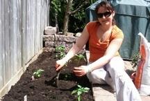 My Home Veggie Garden