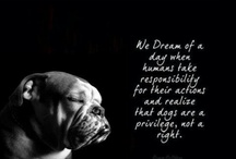 Dog Quotes❤