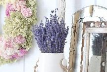 Lavender  ♡ / by Vicky @ hOme