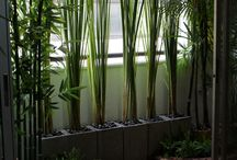 Forest inside house