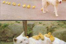 Animals ❤ / Oh wat lief!