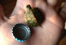 Turtles / The number one thing in the world that makes me happy.