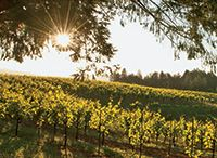 Mendocino Wine Country / For the love of Mendocino wine