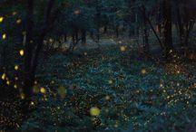 Takehito Miyatake - Night Lights