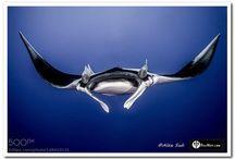 Magnificent Marine Life / Marine Life