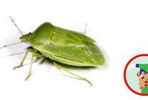 rovarokra háziszerek