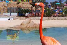San Diego, Chula Vista, live, work and Play
