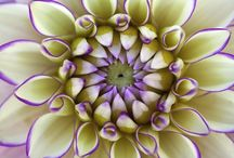 COLORS_true colors / inspiration, colors of nature