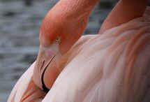 Pink / by Sondra Gronemyer Nannen
