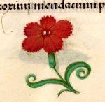 Kwiatuszki, owocki i owadki