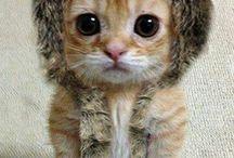 Kittycat!