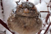 zvieratká v zime