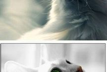 Cats - Pets - Animals