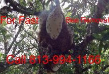 Tampa Bee Removal