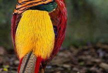 """Bird """"Aves"""""""