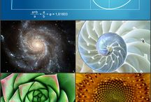 Favoloso - Sequence in nature / The Fibonacci spiral: an approximation of the golden spiral created by drawing circular arcs connecting the opposite corners of squares in the Fibonacci tiling;[4] this one uses squares of sizes 1, 1, 2, 3, 5, 8, 13, 21, and 34.