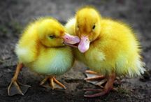 cute and fluffy / by Gill Ricker