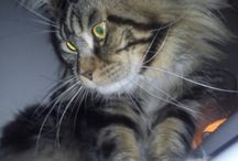 Sebastian Look of Lynx