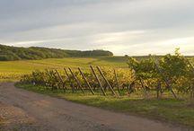 Régions viticoles de France