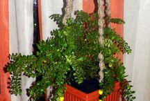 Beautiful Plant Hangers