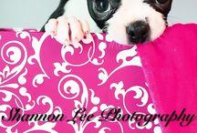 puppy photoshoot / by Kristen Foland