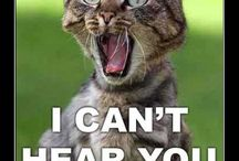 Cats, Funny Cats, Evil Cats Cats Cats Cats / Everything with cats
