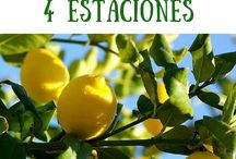 Cómo cuidar un limonero de las 4 estaciones