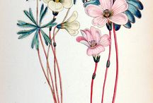 Botanical Illustration / by Amanda Hindes