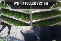 Farming ideas